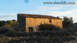 Vendemos Finca de olivos cerca de Maella con masía por 35.000€