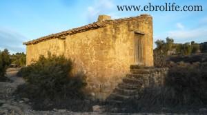 Detalle de Finca de olivos cerca de Maella con almendros por 35.000€