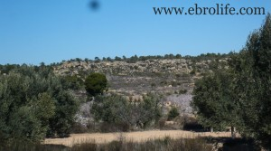 Vendemos Finca de olivos y almendros en producción con almendros
