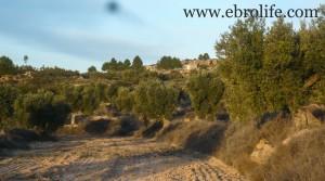 Finca de olivos cerca de Maella para vender con olivos por 35.000€