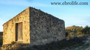 Finca de olivos cerca de Maella a buen precio con almendros por 35.000€