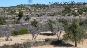 Finca de olivos y almendros en producción en oferta con masía por 27.000€