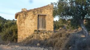 Foto de Finca de olivos cerca de Maella con olivos