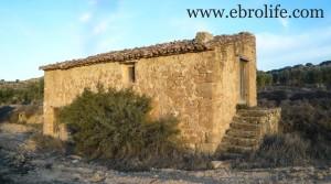 Finca de olivos cerca de Maella para vender con masía