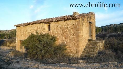 Finca de olivos cerca de Maella