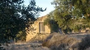 Finca de olivos cerca de Maella en venta con almendros por 35.000€