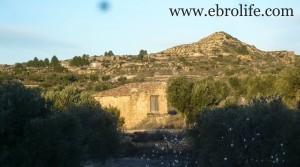 Vendemos Finca de olivos cerca de Maella con higueras por 35.000€