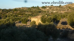 Finca de olivos cerca de Maella para vender con masía por 35.000€