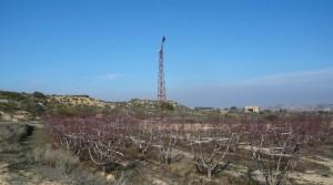 Foto de Finca con balsa con nectarinas por 39.000€
