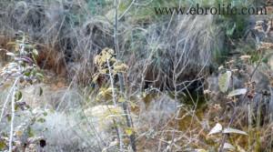 Finca en Arens de Lledó a buen precio con olivos por 43.000€