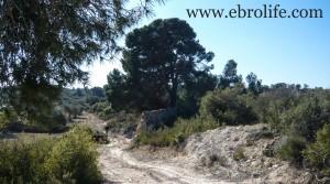 Finca a 7 km de Fabara para vender con olivos por 7.000€