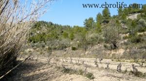 Vendemos Finca en Arens de Lledó con pinares por 43.000€