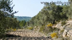 Foto de Finca en Arens de Lledó con agua