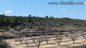 Foto de Finca próxima al río Algars en venta con almendros