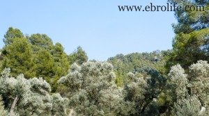 Detalle de Finca en Arens de Lledó con masía por 43.000€