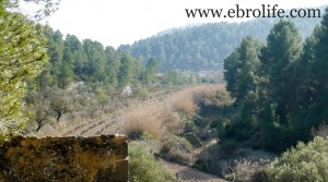 Finca en Arens de Lledó en venta con pinares
