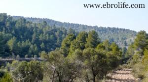 Foto de Finca en Arens de Lledó en venta con olivos por 43.000€