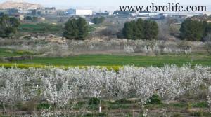 Finca de regadío en Caspe en oferta con olivos por 39.000€
