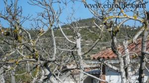Se vende Chalet en Fayón con olivos