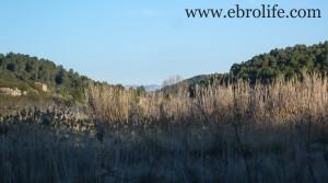 Finca en Mazaleón en venta con olivos por 15.000€