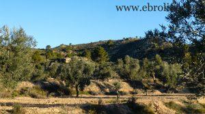 Finca de olivar centenario en Maella a buen precio con pinares
