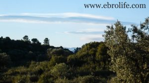 Foto de Finca de olivar centenario en Maella con pinares por 7.500€