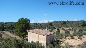 Foto de Finca de olivos en Fabara en venta con masía