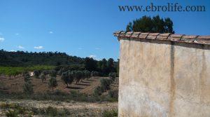 Vendemos Finca de olivos en Fabara con río por 17.000€