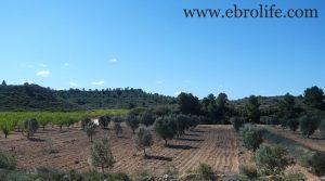 Finca de olivos en Fabara para vender con río por 17.000€