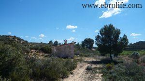 Finca de olivos en Fabara en oferta con masía por 17.000€