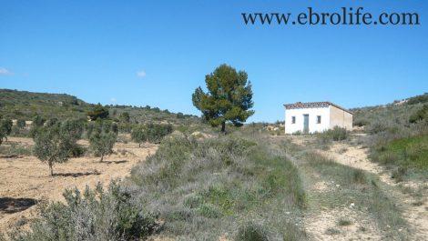 Finca de olivos en Fabara
