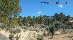 Finca en Mazaleón para vender con olivos por 30.000€