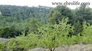 Finca de almendros en Maella para vender con masía por 65.500€