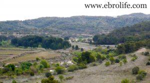Se vende Finca de almendros en Maella con olivos por 65.500€