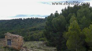 Foto de Finca de almendros en Maella con masía