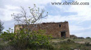 Detalle de Finca de almendros en Maella con almendros