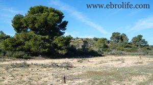 Foto de Finca de secano en Fabara en venta con secano por 24.000€