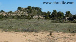 Vendemos Finca de secano en Fabara con monte bajo