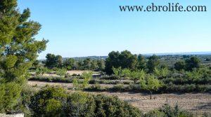 Finca de secano en Fabara en oferta con pinares por 24.000€