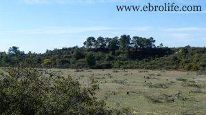 Finca de secano en Fabara a buen precio con monte bajo por 24.000€