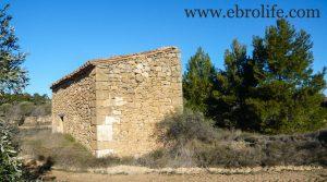 Finca de olivos y almendros en Maella para vender con secano