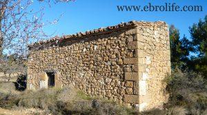 Foto de Finca de olivos y almendros en Maella con pinares por