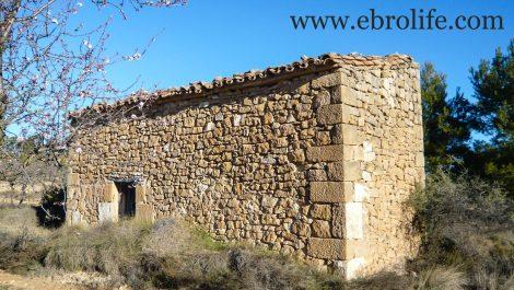 Finca de olivos y almendros en Maella