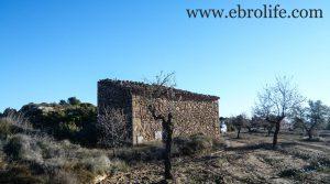 Finca de olivos y almendros en Maella a buen precio con secano por