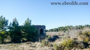 Vendemos Finca de olivos y almendros en Maella con olivos por