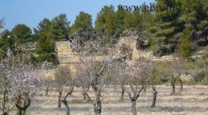 Foto de Finca de olivos y almendros en Calaceite con río