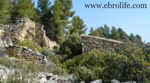 Finca de olivos y almendros en Calaceite en oferta con masía