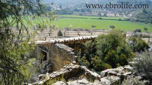 Foto de Finca de olivos y almendros en Calaceite en venta con olivos