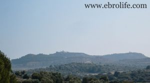 Finca de olivos y almendros en Calaceite para vender con almendros por 85.000€
