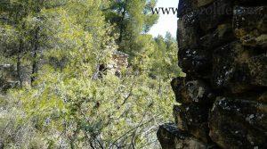 Foto de Finca de olivos y almendros en Calaceite con masía por 85.000€